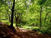 Photo Challenge - Norfolk Paths