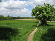 Path across the fields at Strumpshaw