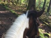 Legs riding through the wood