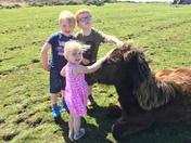 Making friends on dartmoor