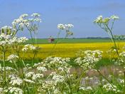 Suffolk in bloom