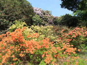 Kaleidoscopic Sheringham Park