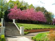 Hollywells Park Blossom 2018