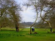 Photo Challenge - Parks