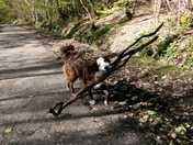 """This is Billy saying """"What do you mean this stick is too big?!"""""""