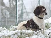 Pets; Rufus in the snow in Chulmleigh