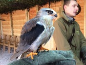 Falconry session at Centre Parcs Longleat Forest.