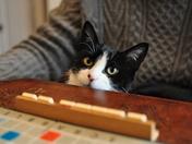 Scrabble Umm Purrfect