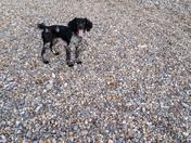 Ripple enjoying the beaches