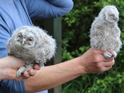 Don't be Bashful!! Come and join us tomorrow at Sculthorpe Hawk and Owl Trust.