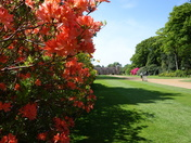 Azaleas at Blickling Hall