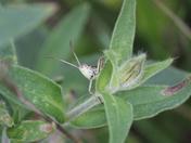 Hidden - Grasshopper