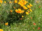 Blooming Suffolk.