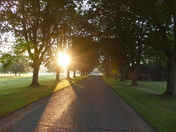 Misty morning sunrise down the avenue.(photo challenge)