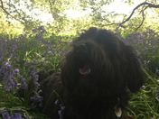 Keeping Cool in the bluebells