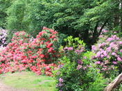 Beautiful Sheringham Park