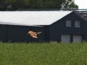 Skylarks over Ellough