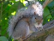 The squirrel.