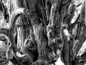 Barnstaple and Instow Beach