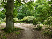 New Areas Cleared For New Planting At Sheringham Park