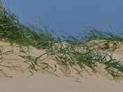 NORFOLK BEACHES, SAND DUNES, WELLS