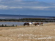 NORFOLK BEACHES, HUNSTANTON