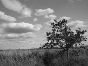 Norton Marshes