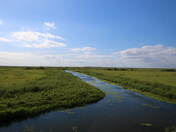 Norton Marshes