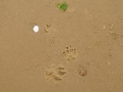 Photo Challenge - Norfolk Beaches