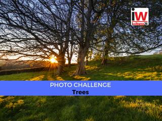 📸 PHOTO CHALLENGE: Trees 📸