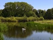 Playford mere Suffolk