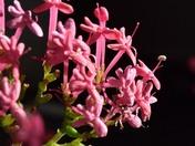 Flora around chulmleigh