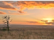 Photo challenge - Trees captured at Molland Common on the edge of Exmoor