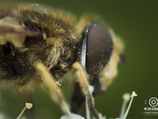 bee,  up close and personal