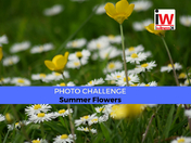📸 PHOTO CHALLENGE: Summer Flowers 📸