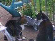 visiting cat 3