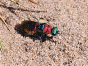 colourful insects.