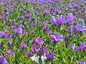 Bloom'n lovely :)
