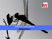 📸 PHOTO CHALLENGE 📸 Silhouettes
