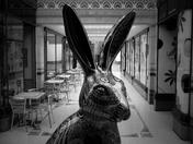 GoGo Hare