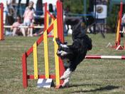 Littleham Fete Dog Agility Class