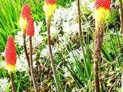 Best Summer Bloomers