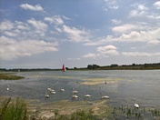swans and sailboats Martlesham creek