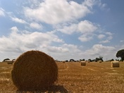 A Summer scene im Suffolk