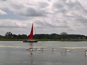 Swans and a sailboat