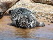 A Happy Seal