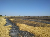 Horsford field fire