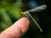 First Willow Emerald