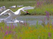 A summer day at Lackford Lakes