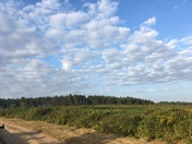 An early morning walk on Woodbury Common